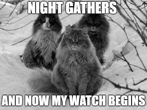 The cats of the nights watch